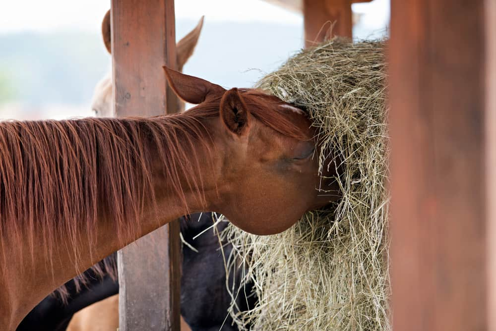 Factors Affecting the Price of Hay