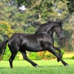 8 Fun Facts About Friesian Horses