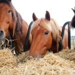 How Much Does a Bale of Hay Cost for Horses? (Saving Tips)