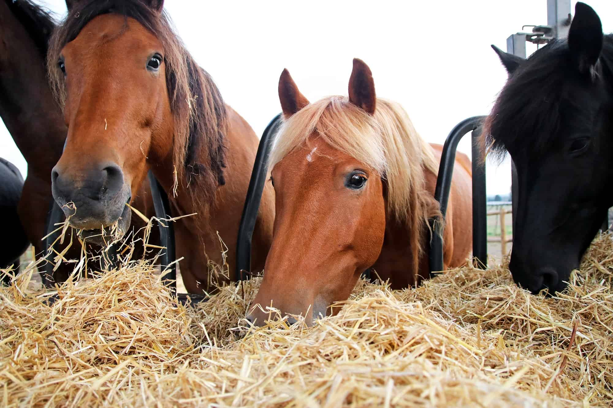 How Much Does a Bale of Hay Cost for Horse