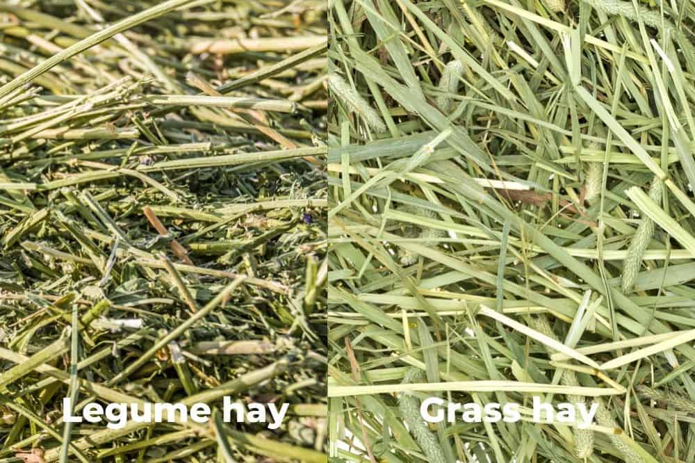 Types of Hay