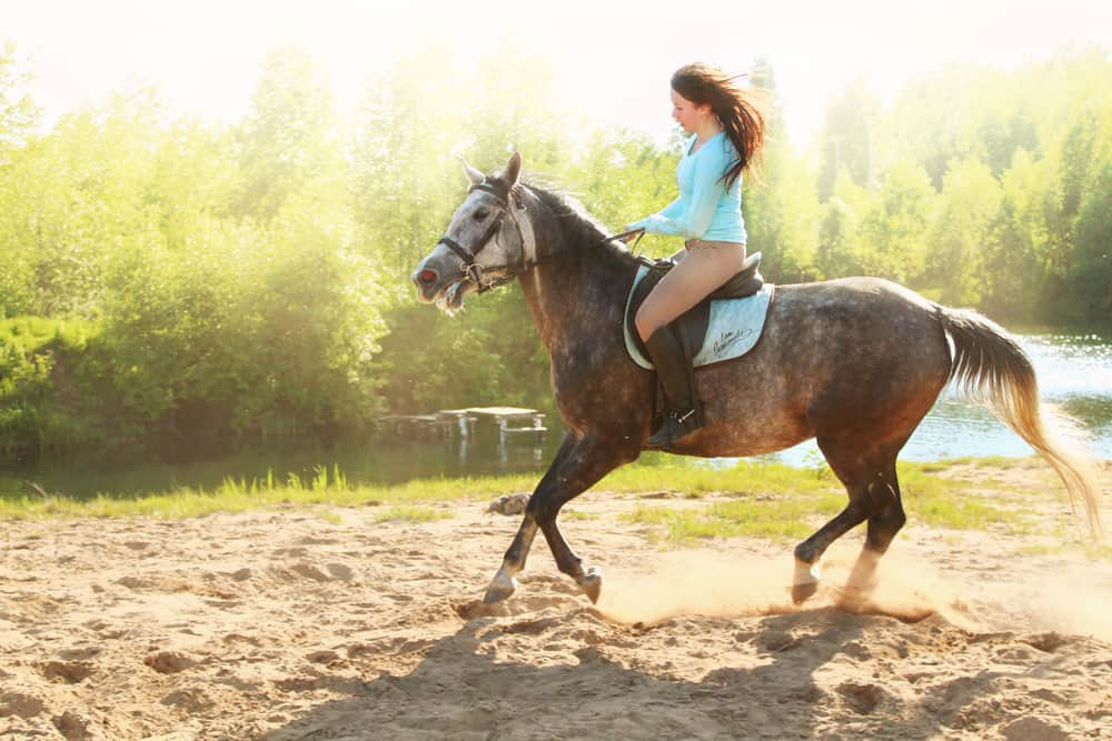 10 Tips to steer a horse