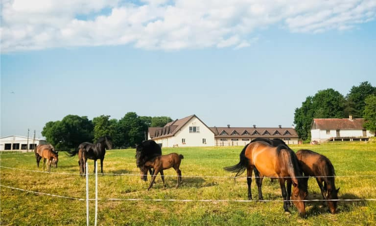 14 Rare Horse Breeds In the World