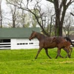 19 Most Popular Horse Breeds & Types of Horses