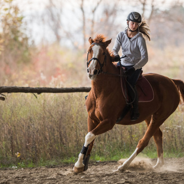 9 Tips to Ride a Horse Western Style