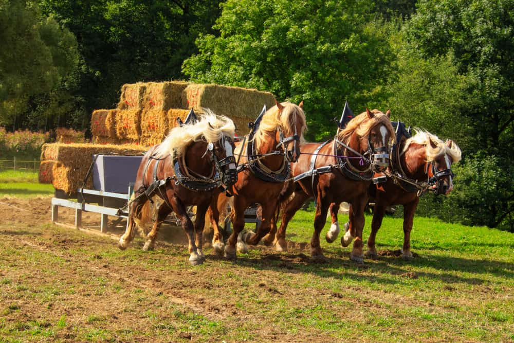 Factors Determining How Much Weight a Draft Horse Can Pull
