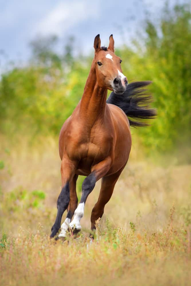 Factors that Determine the Horse Speed