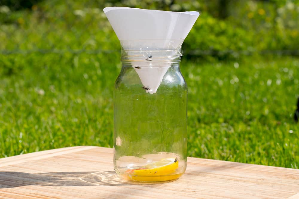 Homemade Mechanical Horse Fly Traps