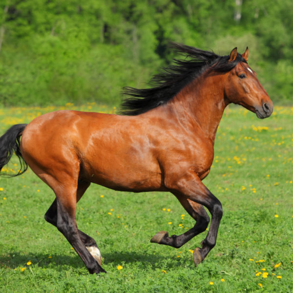 How Long Can a Horse Run? (Daily & Multi-Day Limits)
