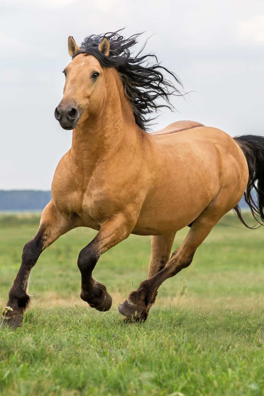 How Long Can a Horse Run