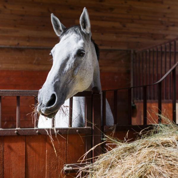 How Long Does a Horse Live? (7 Factors Affect Horse Longevity)