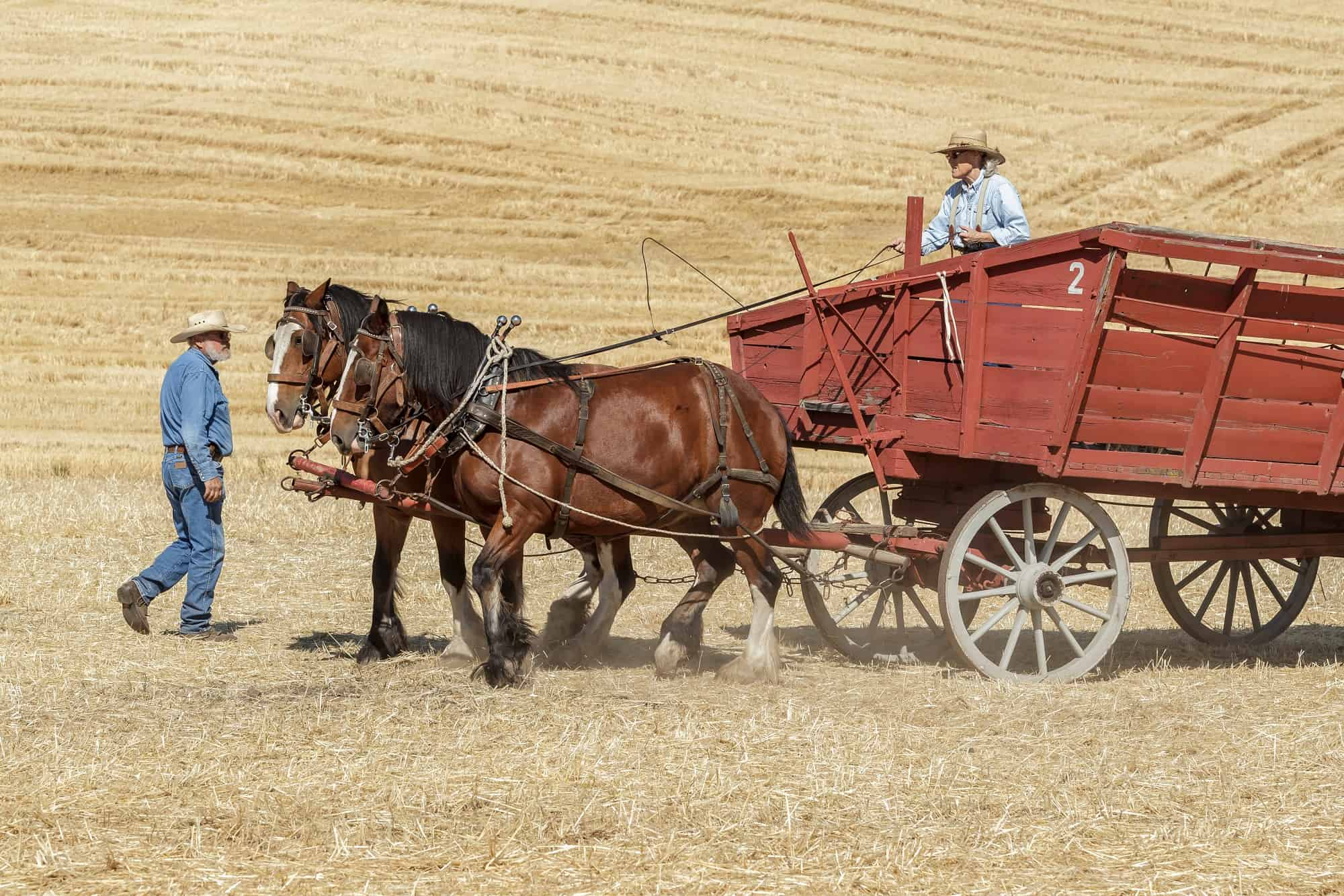 How Much Can a Draft Horse Pull