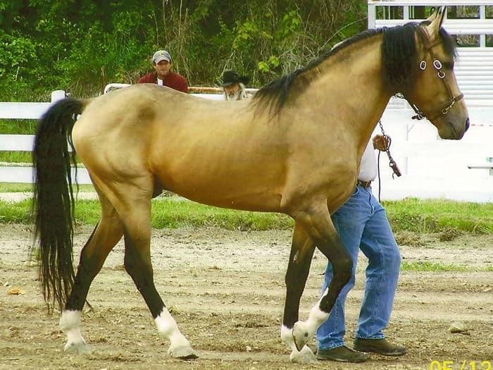 Kentucky Natural Gated horse