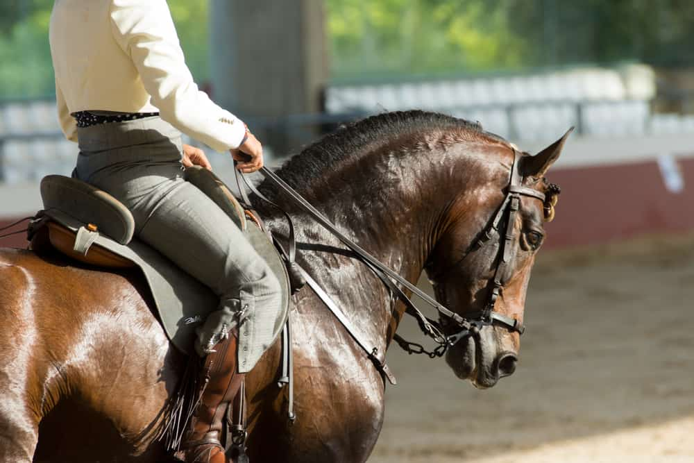 Make Neck Reining Part of Your Regular Riding Routine