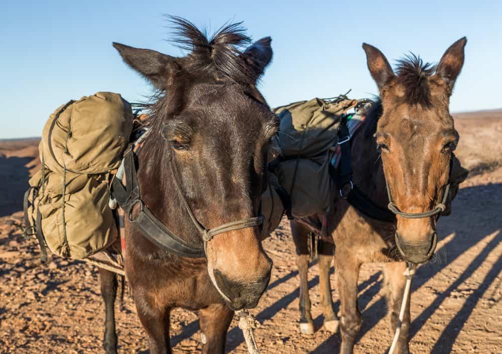 Mules Usage