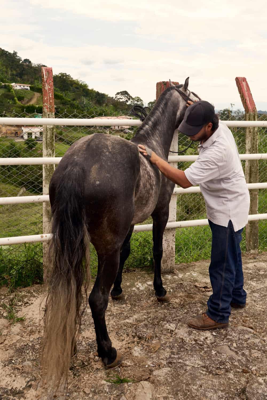 Prepare a Horse