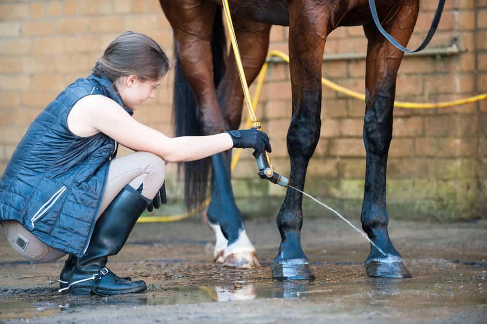 Stallion Horse Care