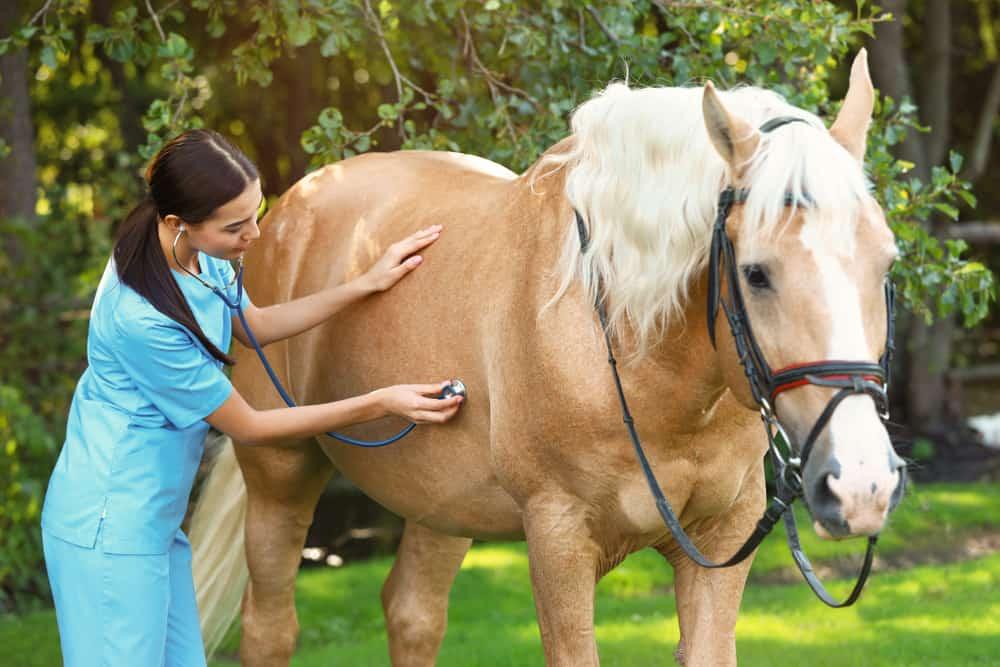 Stallion Horse Common Diseases
