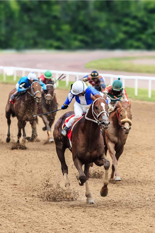 Stallion Horse Racing