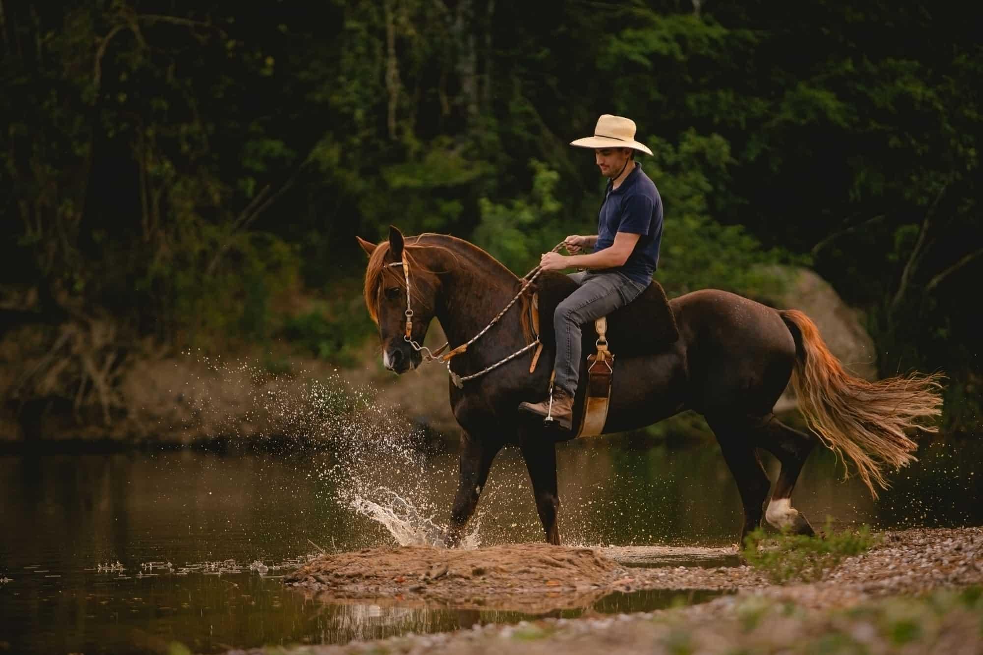 Steer Horse