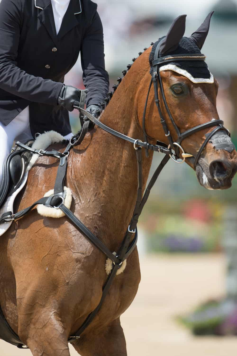 Train Your Horse How to Respond to Rein Cues
