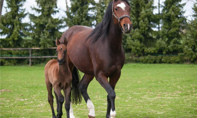 What Is a Mare Horse? Everything You Should Know