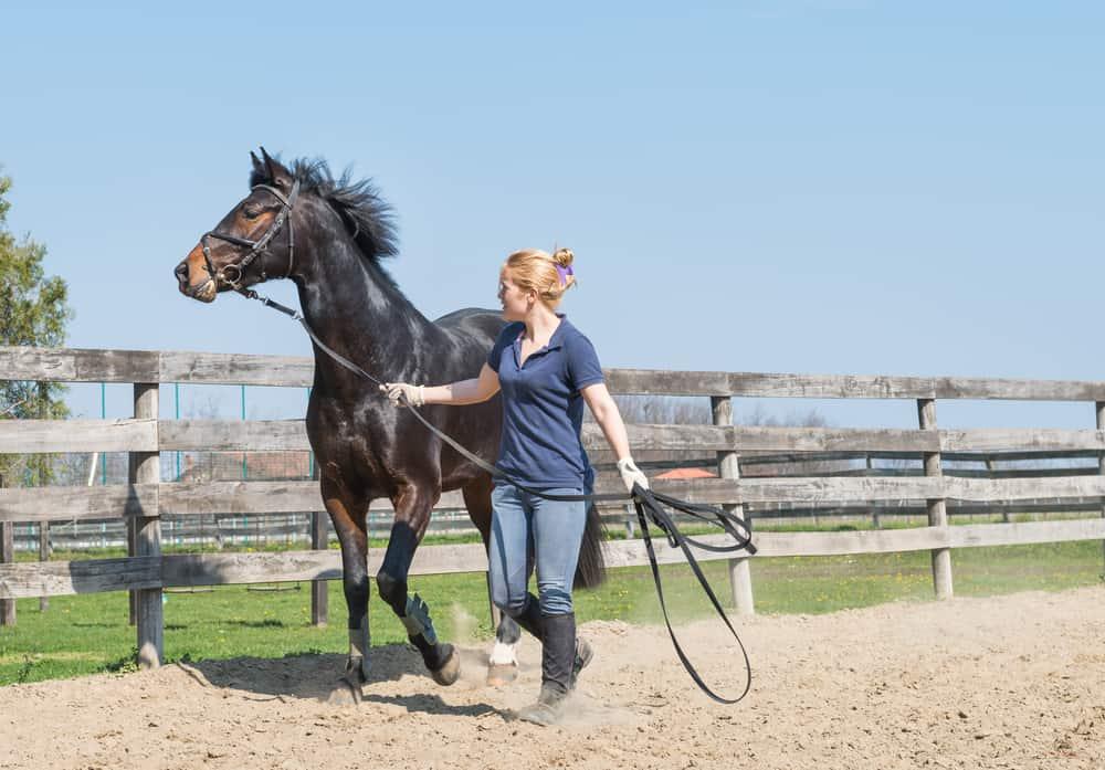 horse training cost