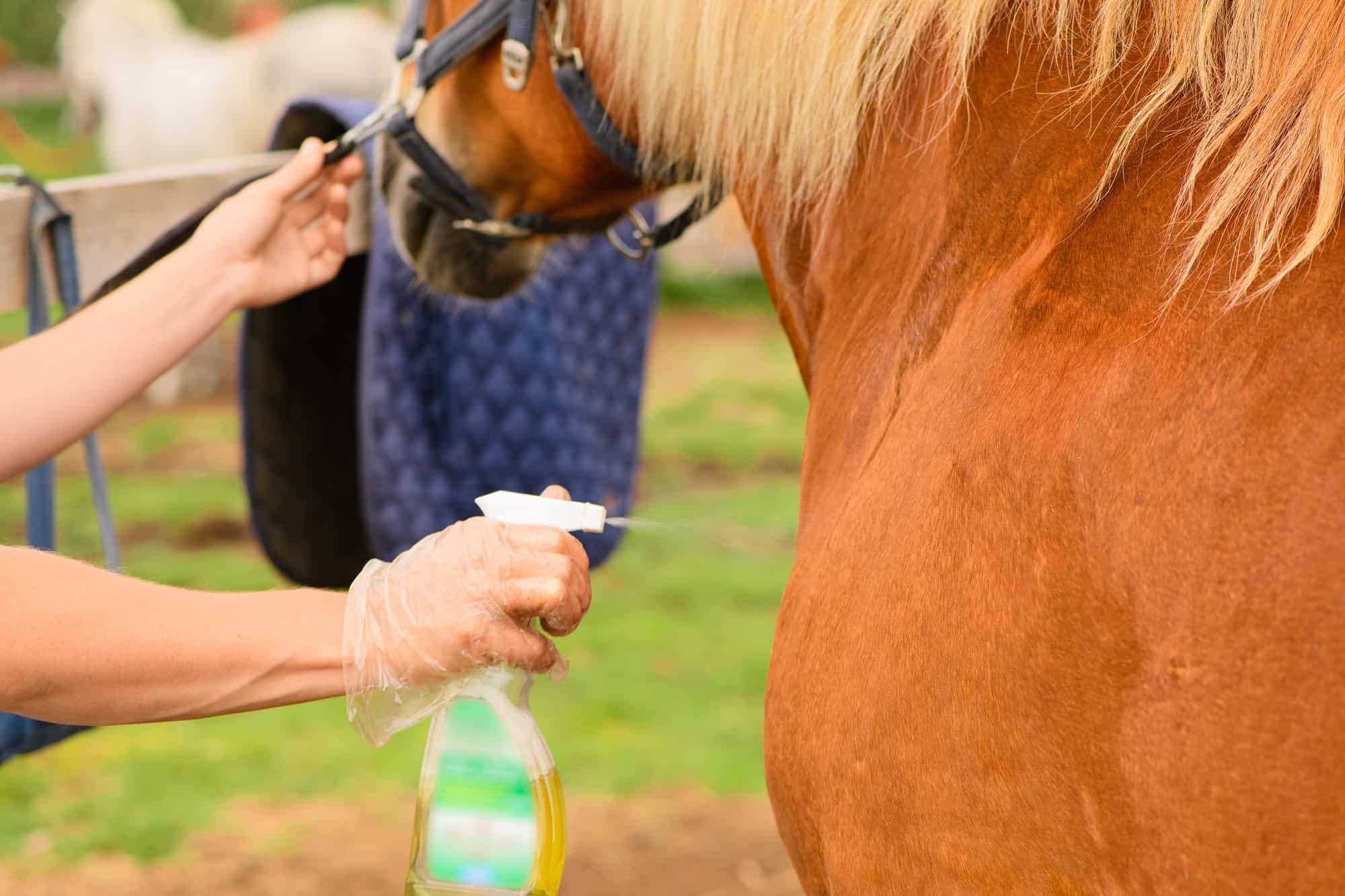 how to Get Rid of Horse Fly