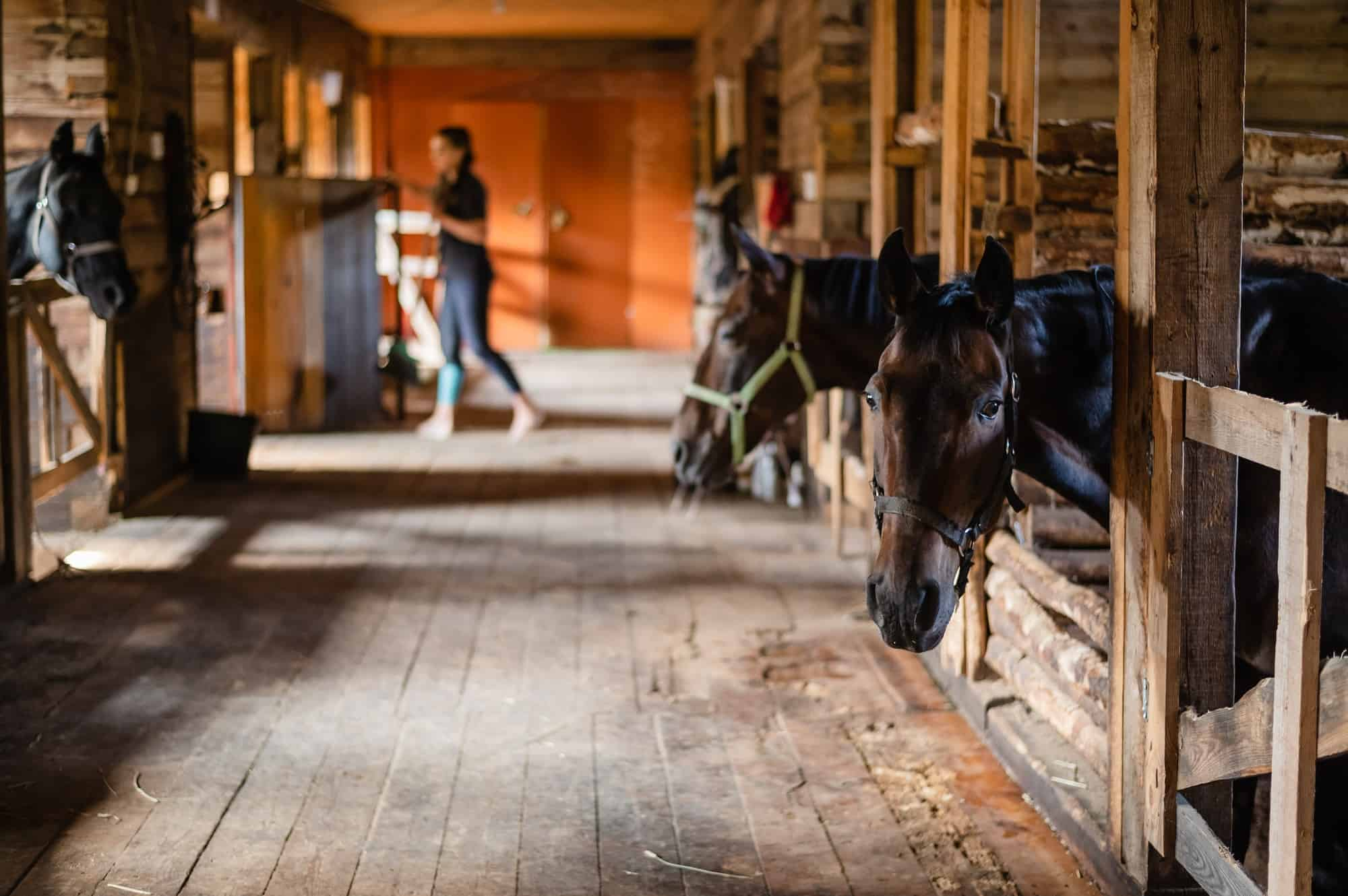 how to build a horse stable