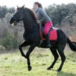 10 Reasons Why Your Horse Is Rearing (Tips to Stop)