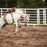 10 Tips to Stop A Horse From Bucking