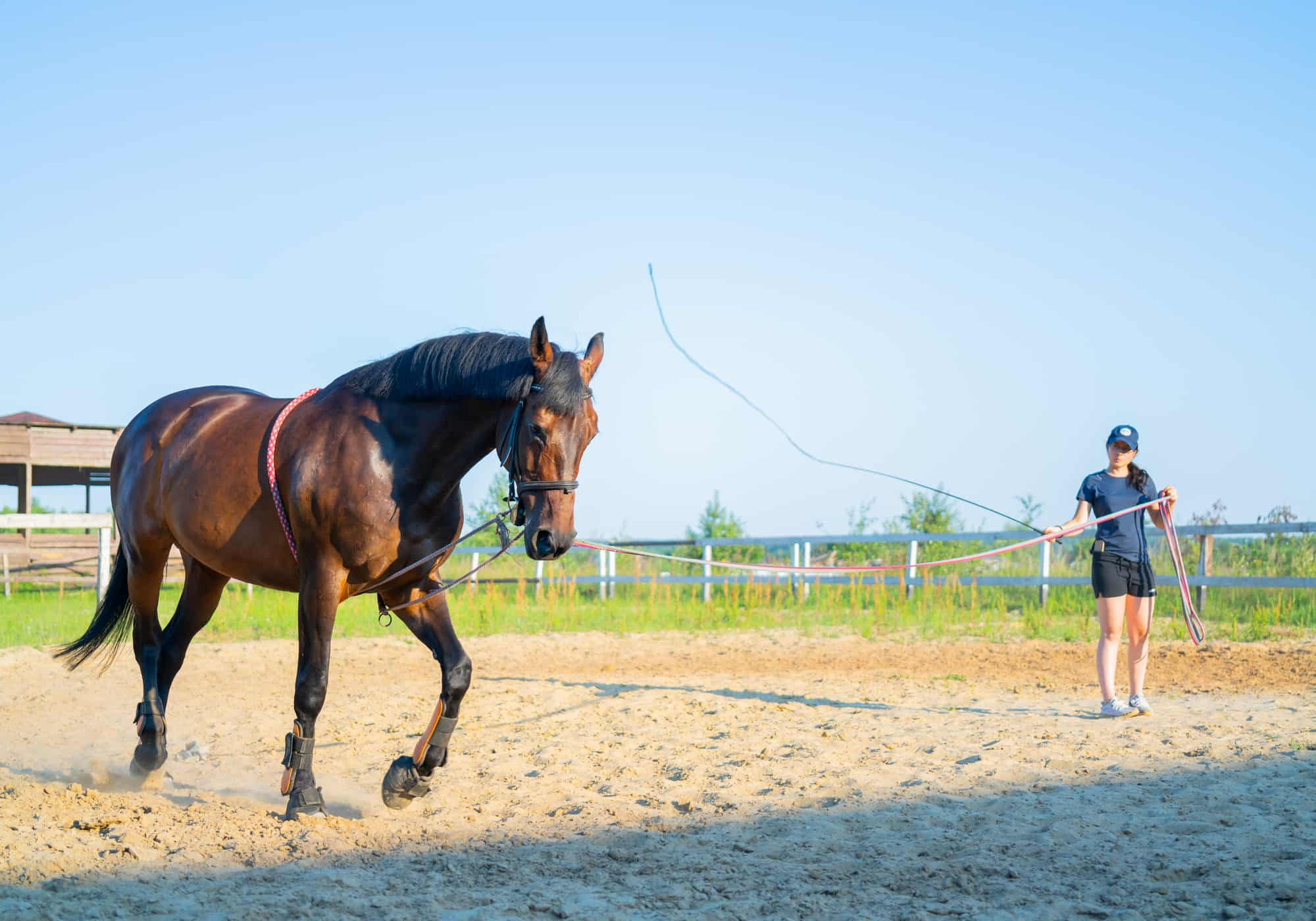11 Tips to Train a Horse