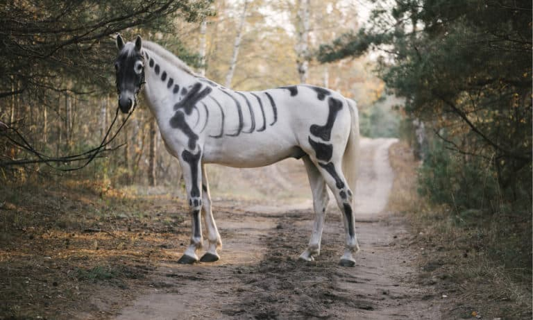 14 Facts About the Horse Skeleton