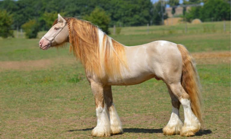16 Facts About a Horse's Mane