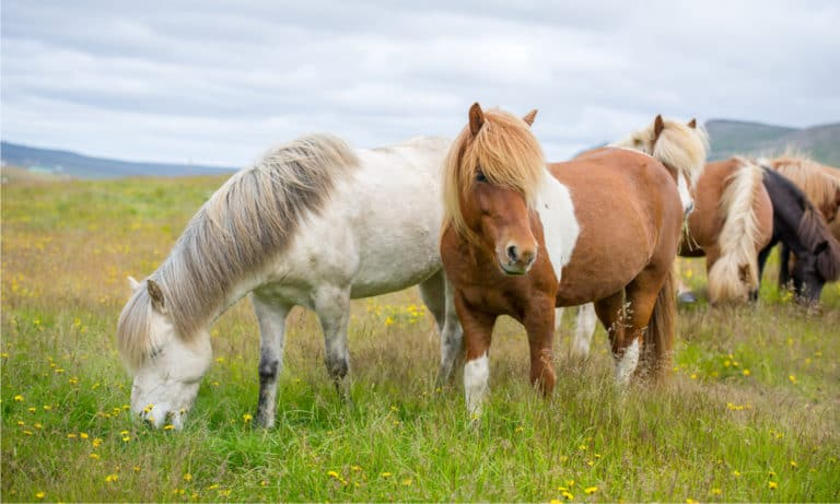 17 Small Horse & Pony Breeds In the World