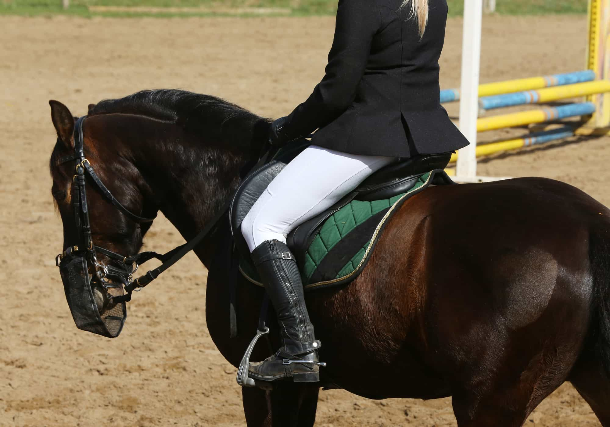 5 Easy Steps to Canter On a Horse (Mistakes to Avoid)