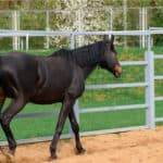 5 Main Horse Fencing Options: Which is Best?