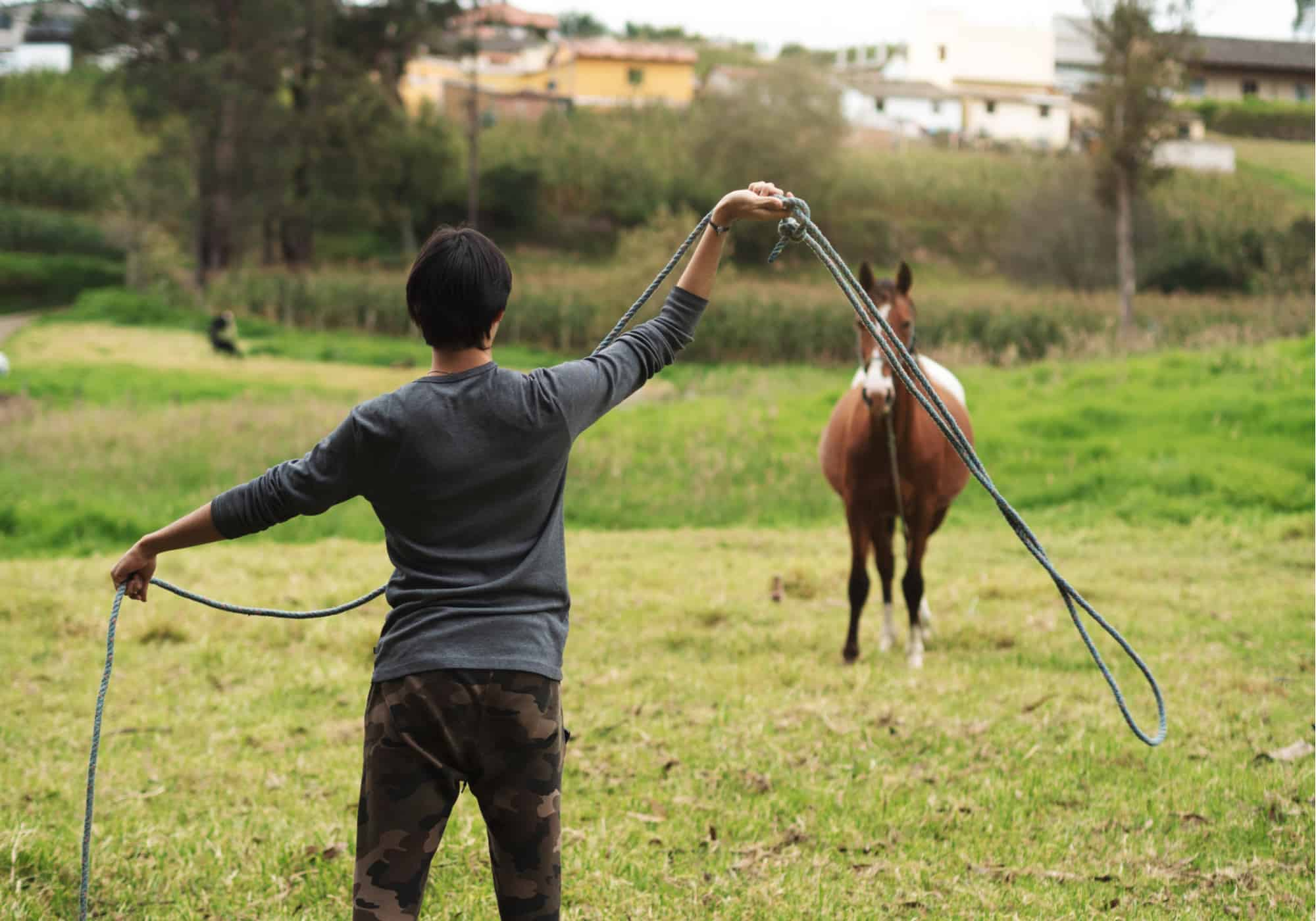 5 Simple Steps to Catch a Horse