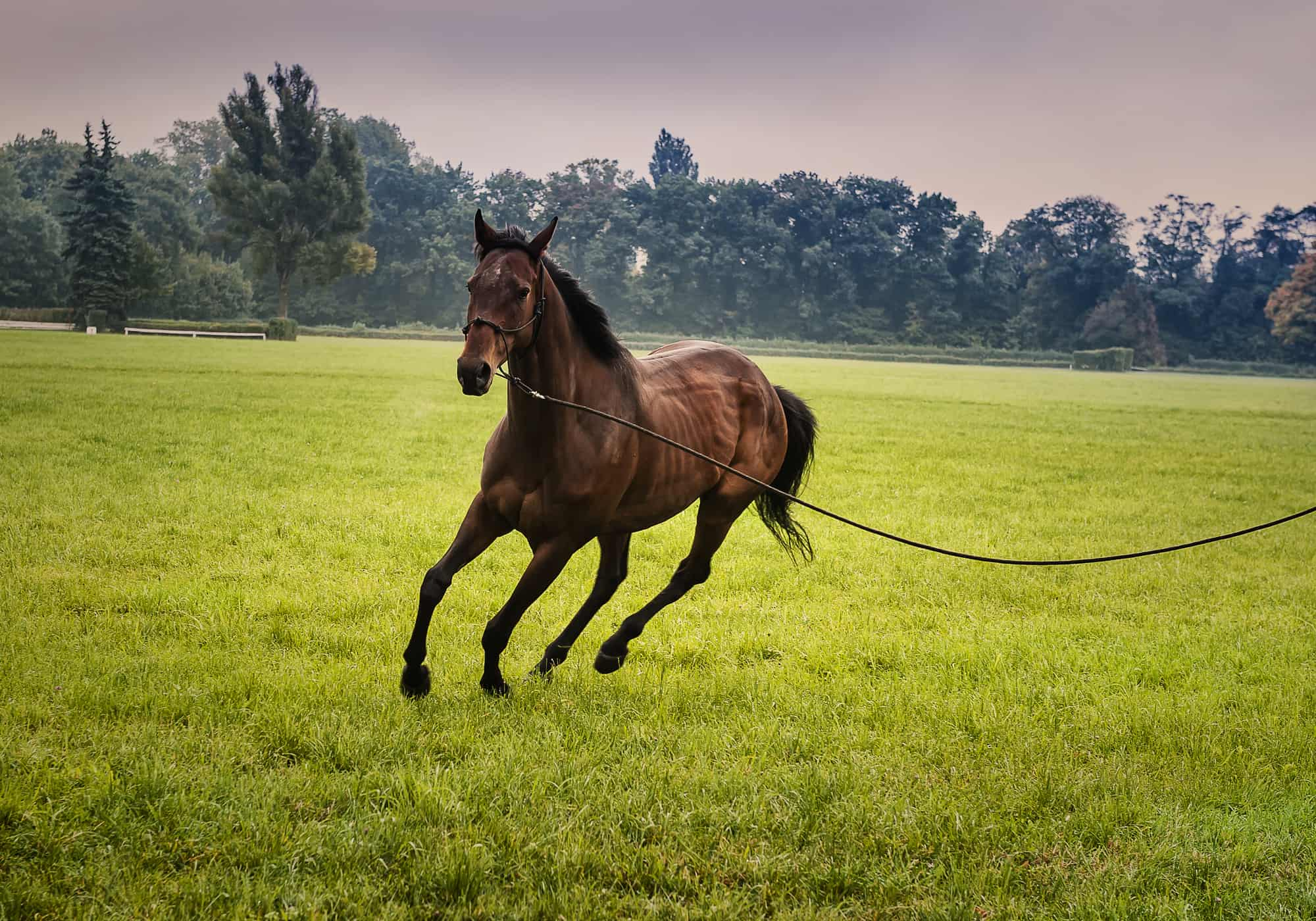 5 Tips to Lunge a Horse