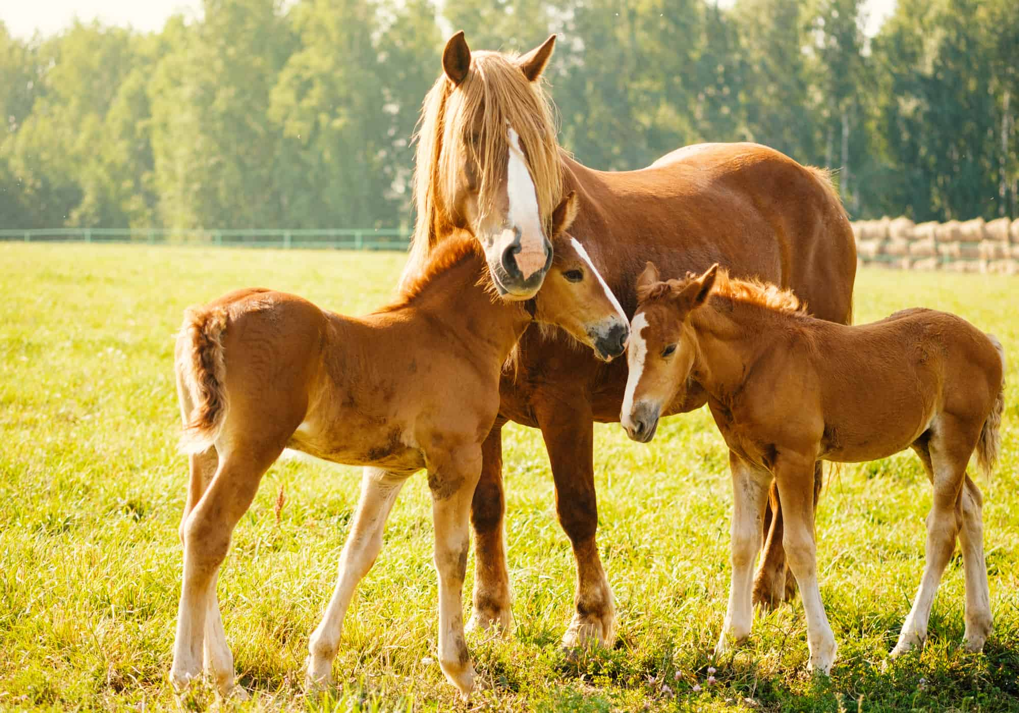 6 Best Places to Buy a Horse