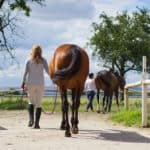 6 Easy Steps to Lead A Horse