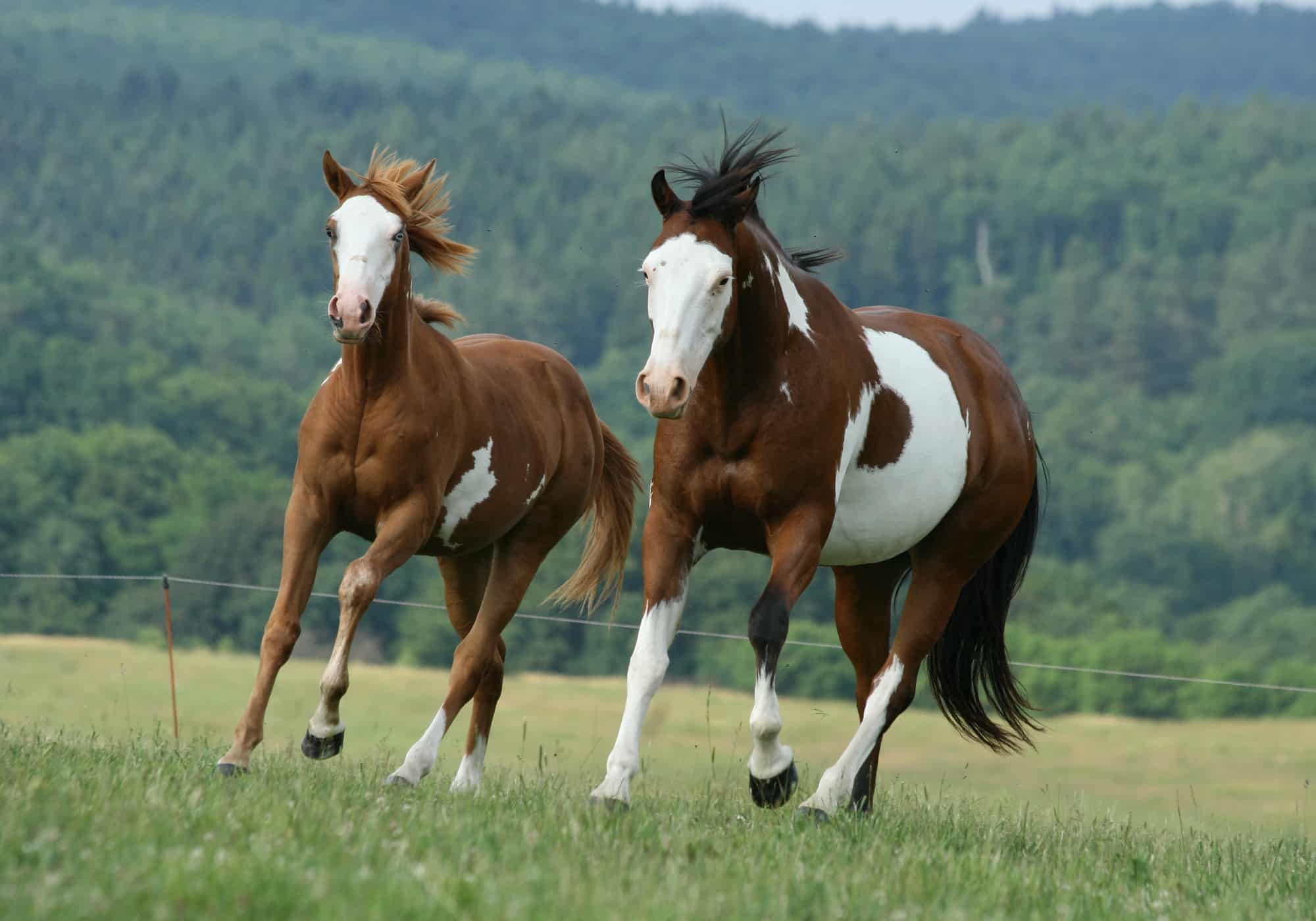 9 Safe Tips to Paint On a Horse