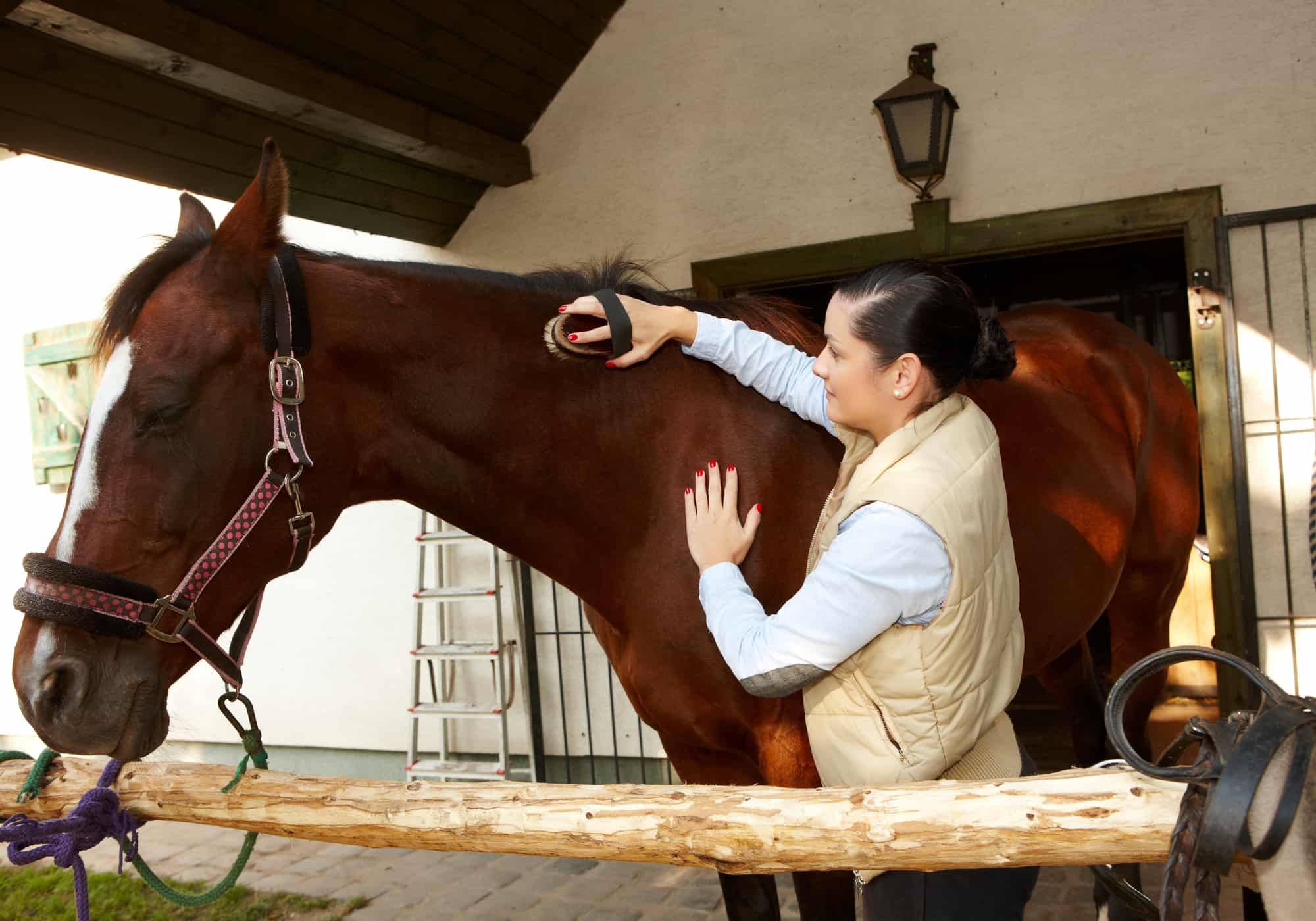 9 Tips to Take Care of a Horse