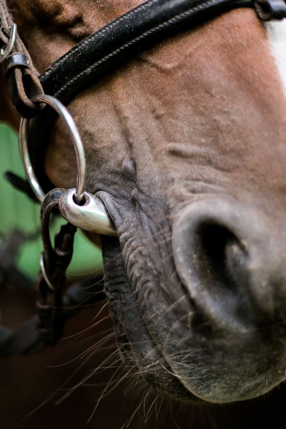 Adjust the horse's gear