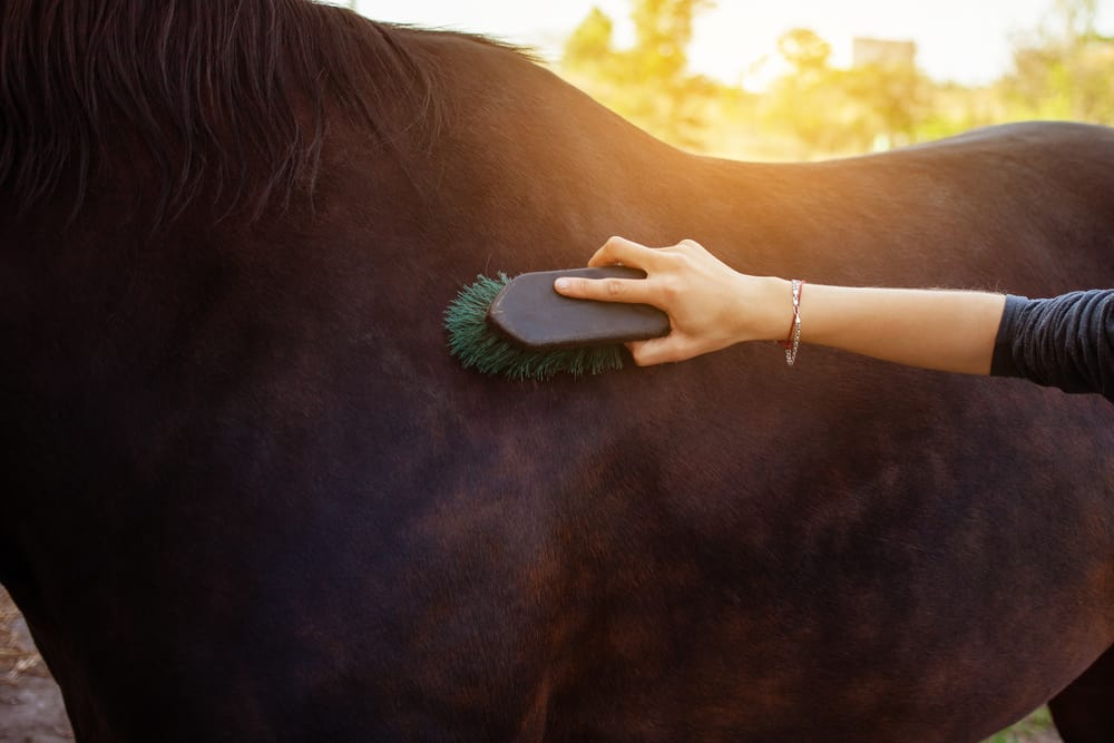 Bathe or groom your equine