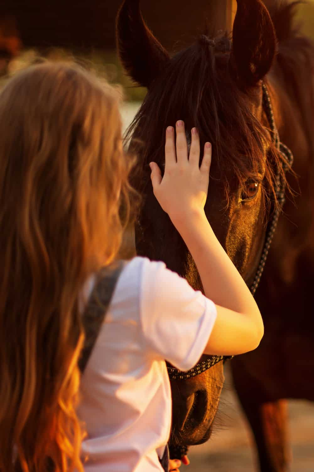 Building Trust With Your Horse