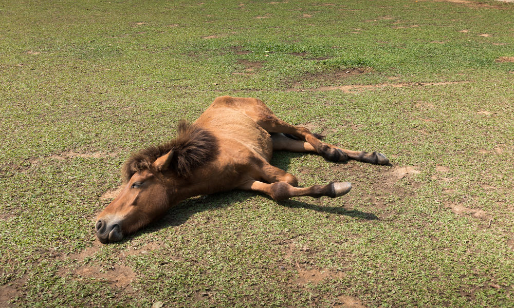 Causes of Horse Colic
