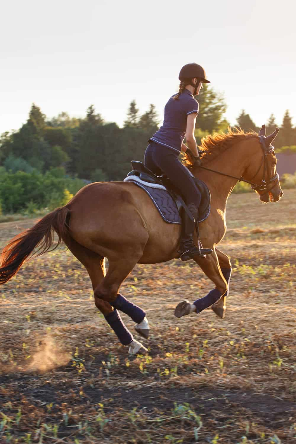 Common Horse Trotting Problems And How To Troubleshoot Them