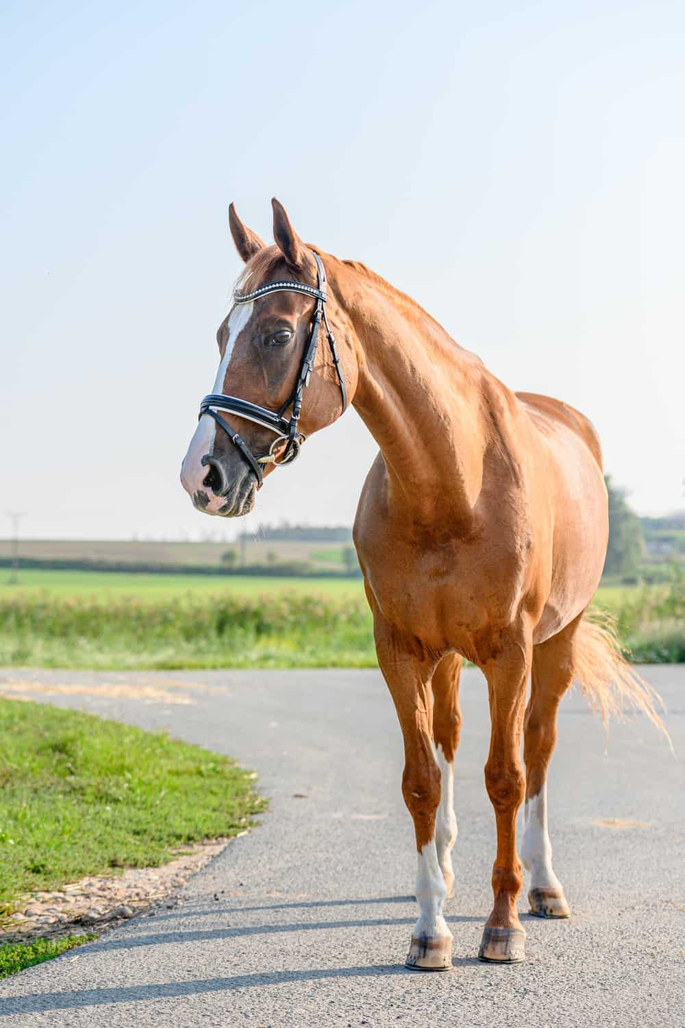 FAQs About Bay Horses