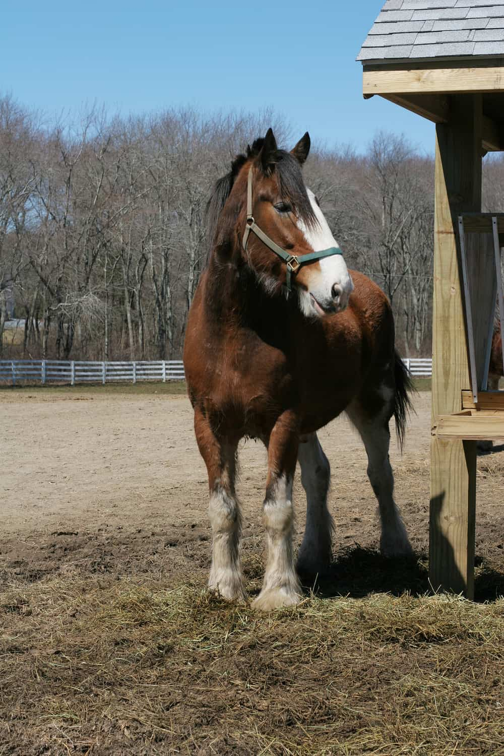Factors that influence the price of a Clydesdale horse